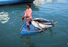 Ein Fischer auf einem Ruderboot voll des enormen frisch gefangenen Thunfischs lizenzfreie stockfotos