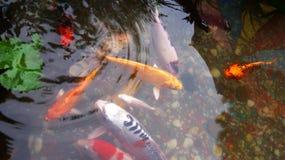 Ein Fischteich im Garten Stockfotos