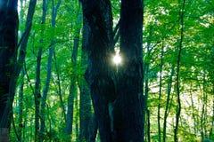 Ein flüchtiger Blick und an der Sonne Stockfotografie