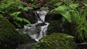 Ein flüssiger Fluss in Dartmoor, Devon stock video footage