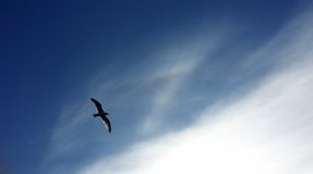Ein Fliegenvogel lizenzfreies stockbild