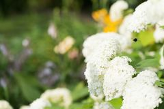 Ein Flug einer Hummel durch Blume bewölkt sich lizenzfreie stockfotografie