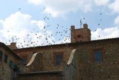 Ein Flug von Tauben in Radicondoli lizenzfreies stockbild