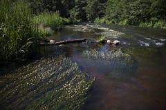 Ein Fluss im Sommer Stockbild