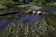 Ein Fluss im Sommer Stockbilder