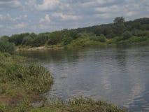 Ein Fluss und Baumwald an stockfotos