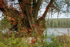 Ein Flussrand lizenzfreie stockbilder
