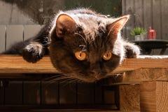 Ein Fokus der schwarzen Katze auf einem Ball Stockbilder