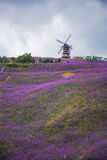 Ein formativer Lavendel-Feld-Park Stockbild