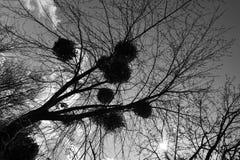 Ein Foto, das oben einer Überdachung von Bäumen gegen einen Himmelhintergrund in einem Park betrachtet Lizenzfreies Stockbild
