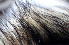 Ein Foto der Nahaufnahme eines Pelzes lizenzfreie stockbilder