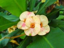 Ein Foto einer hellen gelben Blume Stockfotos