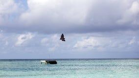 Ein Foto eines schön gefilterten Schlägers in Malediven Stockbilder
