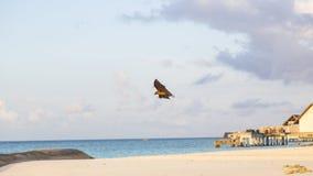 Ein Foto eines Schlägers von den Malediven, so schnell Lizenzfreie Stockfotos