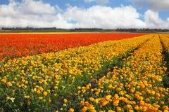 Ein Frühling in Israel stockfotografie