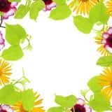 Ein Frühlingsrahmen mit den Lindebaumasten, gelbe Kamille und rosa Blumenknospen, Niederlassungen und Blätter lokalisiert auf wei Lizenzfreies Stockbild