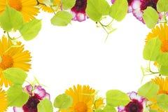 Ein Frühlingsrahmen mit den Lindebaumasten, gelbe Kamille und rosa Blumenknospen, Niederlassungen und Blätter lokalisiert auf wei Stockbilder