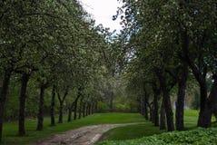 Ein Frühlingsweg zwischen den Bäumen Stockfotografie