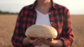 Ein Frauenlandwirt steht auf einem Weizengebiet, das in der Hand ein Laib des Weißbrots hält stock footage