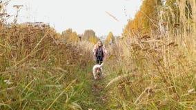 Ein Frauenspiel mit Hund stock video footage