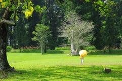 Ein Frauenweg mit gelbem Regenschirm an botanischem Garten Bogors stockfotos