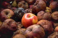 Ein frischer Apfel unter Dutzenden von den faulen Opposition, Konfrontationskonzept stockfotos