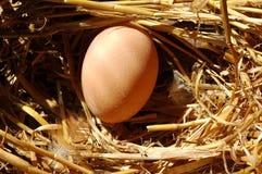 Ein frisches Ei Lizenzfreies Stockfoto