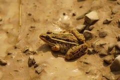 Ein Frosch Stockfoto