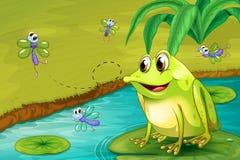 Ein Frosch, der auf seine Mahlzeit wartet Stockfoto