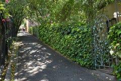 Ein Fußgänger geht durch gescheckten Sonnenschein auf dem Abkürzungs-Weg in Berkeley, CA stockbild