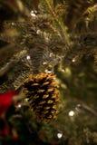 Ein funkelndes Gold Pinecone Lizenzfreies Stockbild