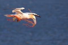 Ein gannet mit einem orange Seil lizenzfreies stockbild