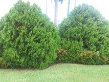 Ein Garten in Miami, Florida Vereinigte Staaten Stockfotografie