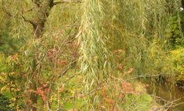 Ein Garten mit einem Weidebaum und einem Strom Lizenzfreie Stockfotografie