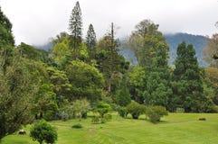 Ein Garten mit Gebirgshintergrund Stockbilder