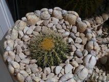 Ein Garten von Oberteilen mit Kaktuspflanzen Lizenzfreies Stockfoto