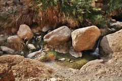 Ein Gedi国家公园 以色列 免版税库存照片