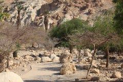 Ein Gedi自然保护,死海,以色列 免版税库存照片