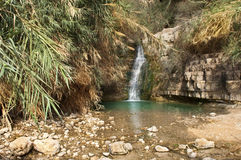 Ein Gedi creek, Dead sea, Israel Stock Photography