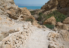 Ein Gedi, Dode Overzees, Israël Royalty-vrije Stock Fotografie