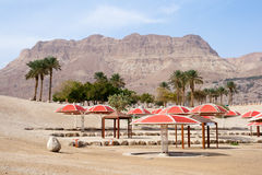 Ein Gedi - Israel Stock Photos