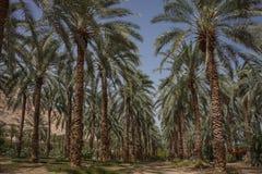 Ein Gedi, Israel. Ein Gedi is an oasis in Israel, located west of the Dead Sea, near Masada stock image