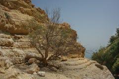 Ein Gedi, Israel. Ein Gedi is an oasis in Israel, located west of the Dead Sea, near Masada royalty free stock image