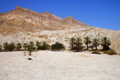 Ein Gedi landscape Stock Photo
