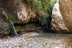 Ein Gedi, mar muerto, Israel Foto de archivo