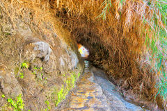 Ein Gedi National Park in Israel Royalty Free Stock Images