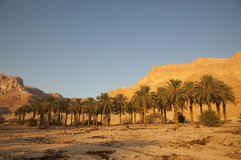 Ein Gedi national Park Stock Images