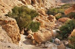 Ein Gedi nationalpark israel Royaltyfria Foton