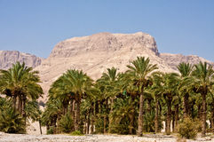 Ein Gedi Nature Reserve Royalty Free Stock Images