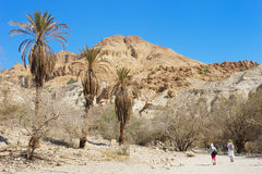 Ein Gedi Nature Reserve (Israel) Stock Photography